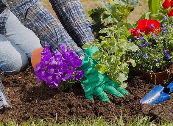 Travaux jardinage Vire